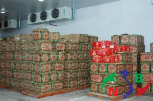 Phương pháp sử dụng và lợi ích của Kho lạnh bảo quản nông sản