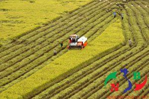 Doanh nghiệp đầu tư vào nông nghiệp – Cả 2 cùng có lợi!