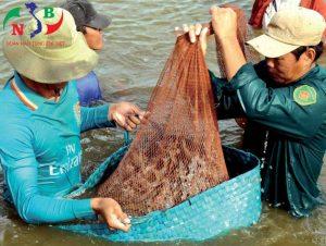 Nghị định của chính phủ về phát hành chính sách phát triển thủy sản