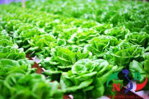 Giải pháp phát triển nông nghiệp sạch bằng công nghệ hiện đại