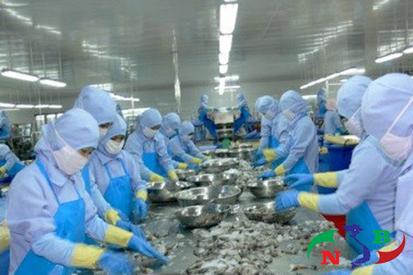 Chế biến tôm trong kho lạnh bảo quản thủy sản