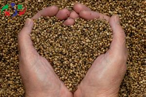 Kho lạnh bảo quản Hạt giống – phương pháp tối ưu cho ngành nông nghiệp