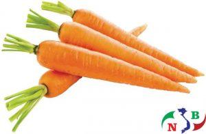 Lắp đặt kho lạnh để bảo quản cà rốt
