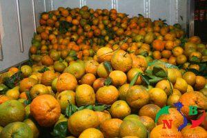 Lắp đặt, cho thuê kho lạnh bảo quản hoa quả tết