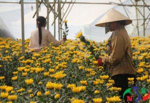 Cách bảo quản hoa tươi bằng kho lạnh