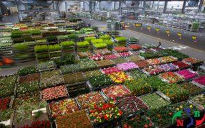 Cách bảo quản hoa tươi ở trong kho lạnh