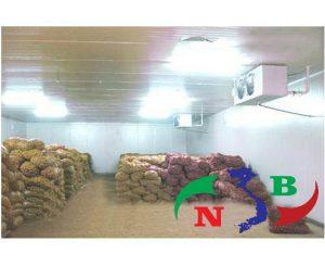 Bảo quản khoai tây sử dụng phương pháp kho lạnh