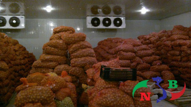 Khoai được đóng gói trong kho lạnh bảo quản khoai tây