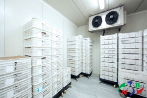 Những lợi ích của kho lạnh dùng để bảo quản thực phẩm