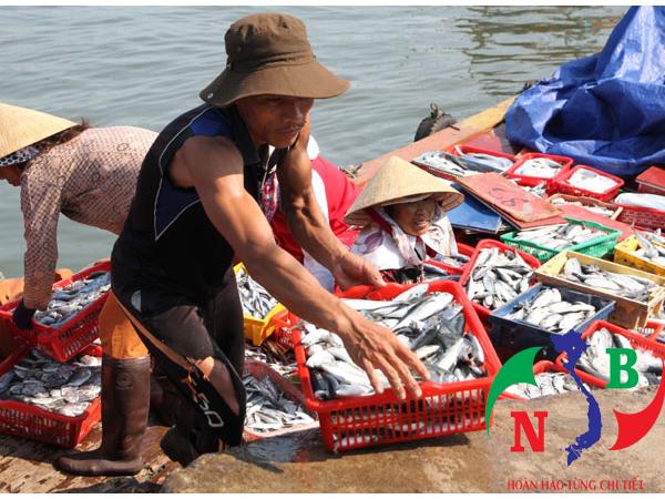 Các chính sách phát triển thủy hải sản