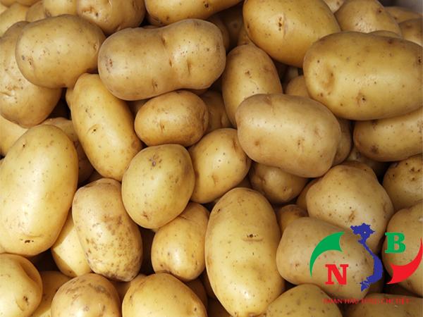 Thiết kế kho lạnh bảo quản khoai tây