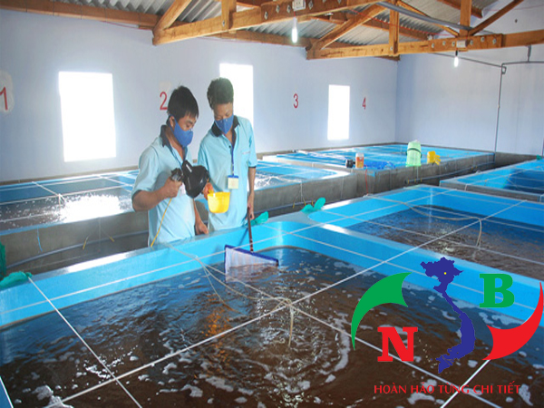 5 giải pháp tăng cường sức đề kháng cho động vật thủy sản