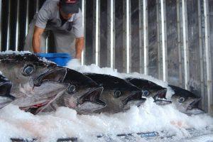 Những điều cần biết khi lựa chọn kho lạnh bảo quản cá