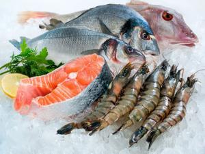 Lắp đặt kho lạnh công nghiệp bảo quản hải sản tươi