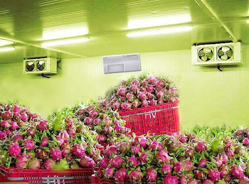 Kho lạnh bảo quản nông sản trái thanh long tại Hà Nội tốt nhất