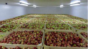 Sử dụng kho lạnh để bảo quản táo tươi