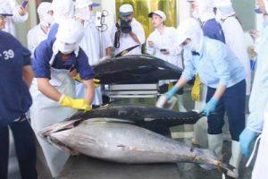Vì sao thủy sản của người Nhật có giá thành cao hơn