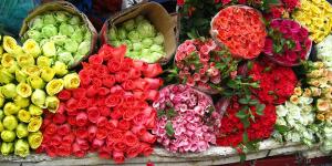 Bảo quản hoa tươi bằng phương pháp kho lạnh
