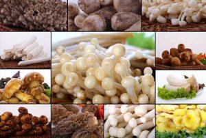 Nấm được bảo quản bằng kho lạnh công nghiệp