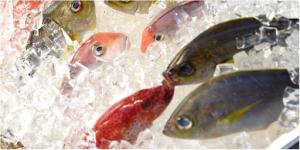 Kho lạnh dùng để bảo quản hải sản tươi sống
