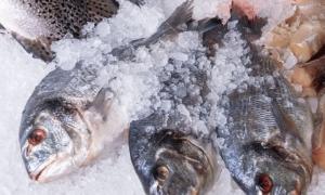 Kho lạnh bảo quản hải sản đạt tiêu chuẩn, dung tích lớn