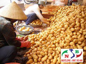 Sử dụng phương pháp kho lạnh bảo quản khoai tây