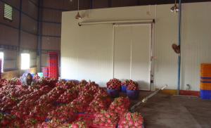 Hướng dẫn thi công lắp đặt kho lạnh bảo quản là lưu trữ nông sản