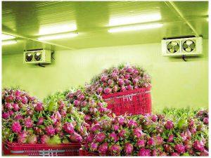 Cách bảo quản trái cây ở trong kho lạnh bảo quản