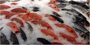 Kho lạnh bảo quản cá – biện pháp bảo quản hiệu quả trong thời gian dài