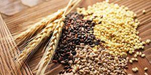 Lắp đặt kho lạnh bảo quản ngũ cốc cần lưu ý những điểm gì?
