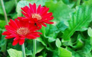 Kho lạnh bảo quản hoa cúc và hoa đồng tiền