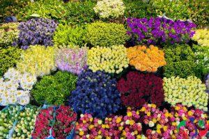 Kho lạnh bảo quản hoa loa kèn, hoa ly và hoa hồng