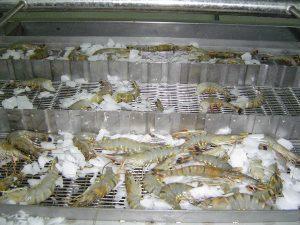 Kho lạnh bảo quản thực phẩm hải sản có thực sự cần thiết