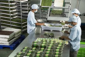 Kho lạnh nông sản và những cơ hội phát triển vững mạnh cho nông sản Việt