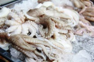 Tiêu chí xác định kho lạnh bảo quản mực, bạch tuộc đạt chuẩn