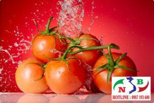 Khắc phục tính mùa vụ của nông sản với kho lạnh bảo quản cà chua