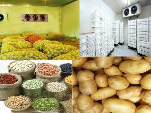 Quy trình bảo quản khoai tây giống bằng kho lạnh