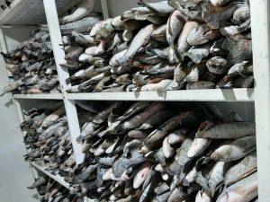 Giới thiệu kho lạnh bảo quản cá